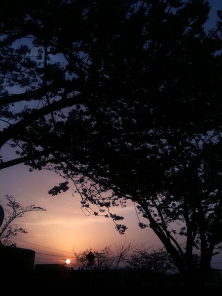 Sakura2010_3