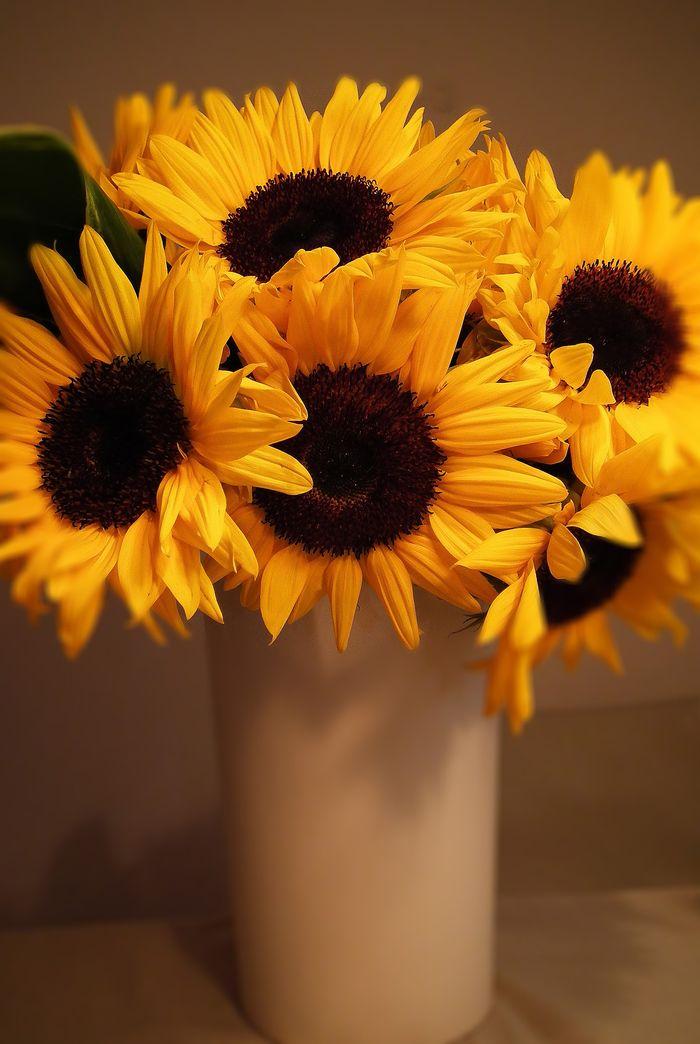 Yokobirthday_sunflower