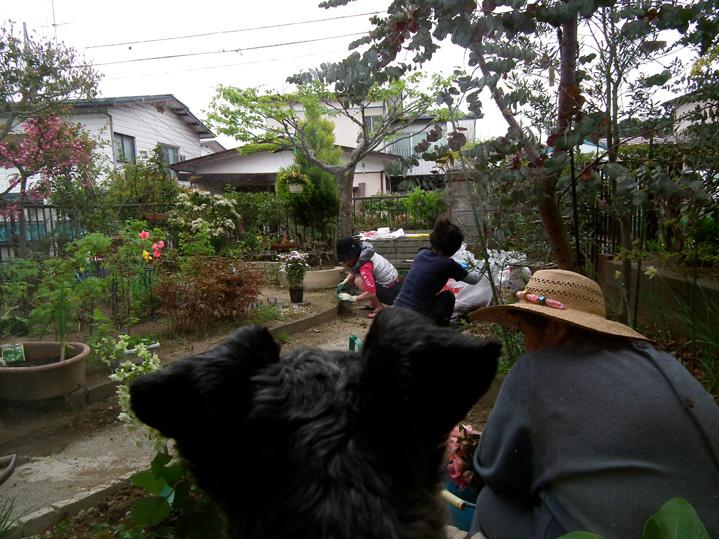 Shiogamagarden05