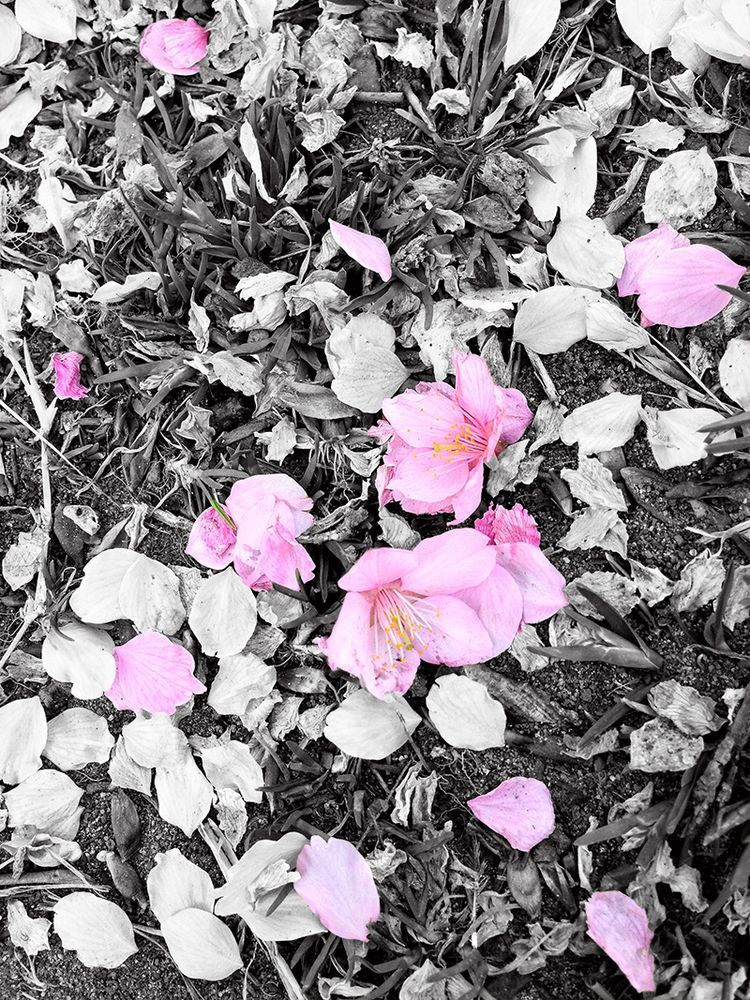 Sakura20130320_takasu