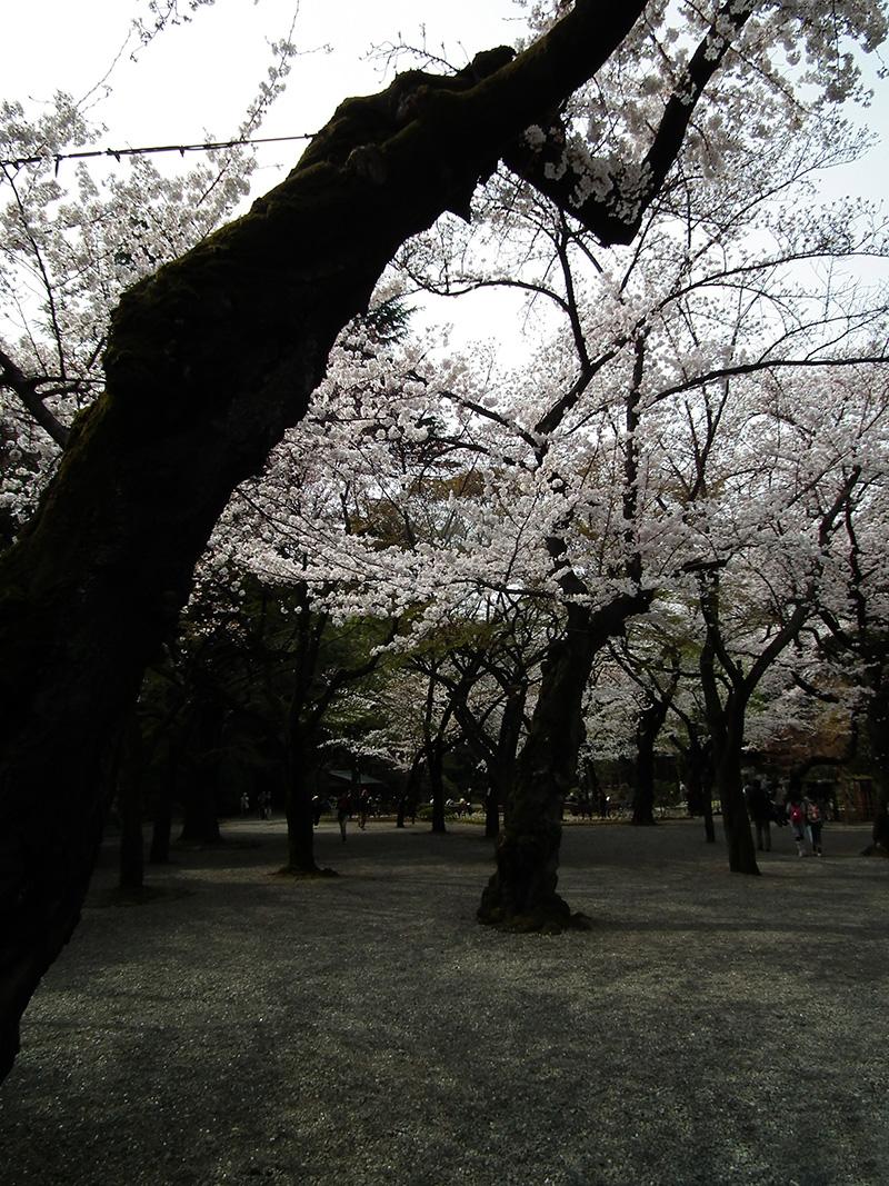 Yasukuni2013_3