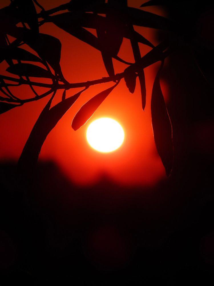 Sunset130119