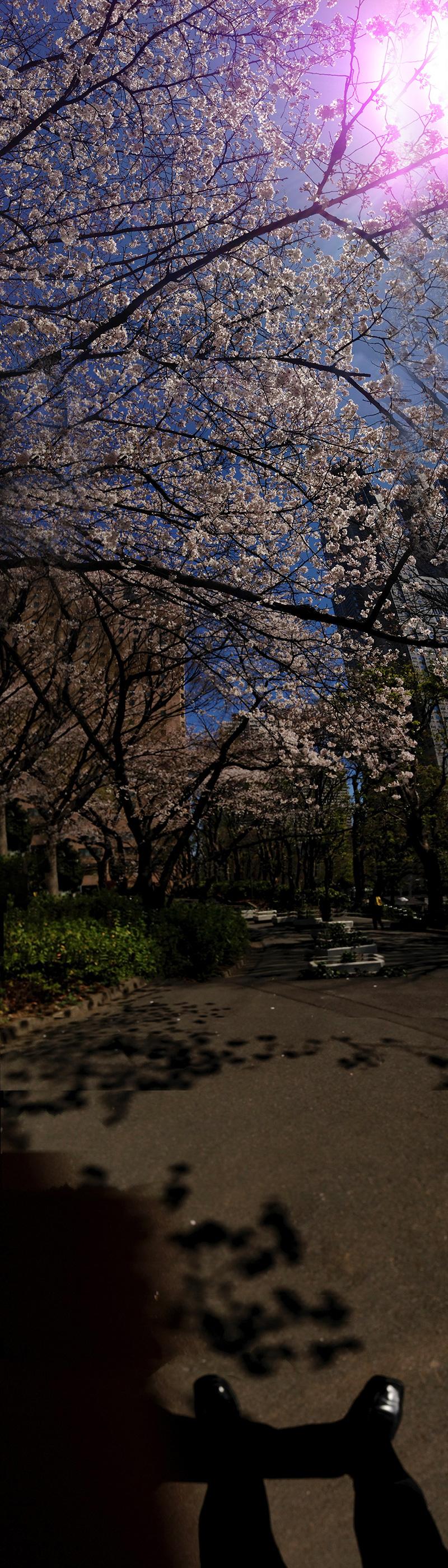 Shinjuku_park02