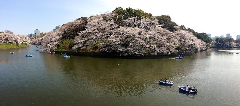 Chidorigafuchi2013_5