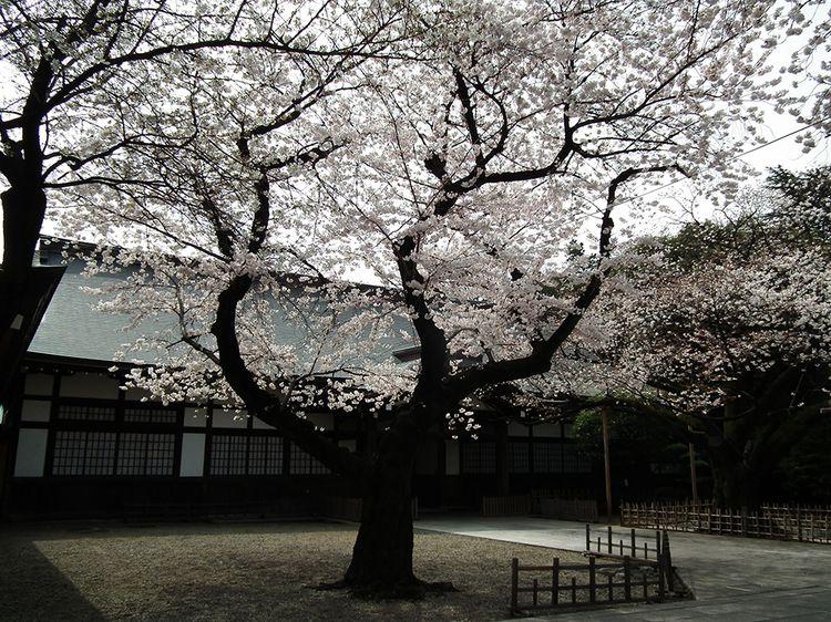 Yasukuni2013_2