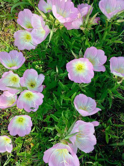 Flower05_3