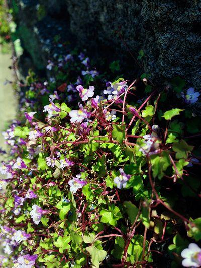 Flower05_4