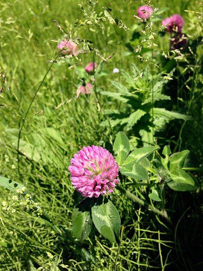 Flower05_1