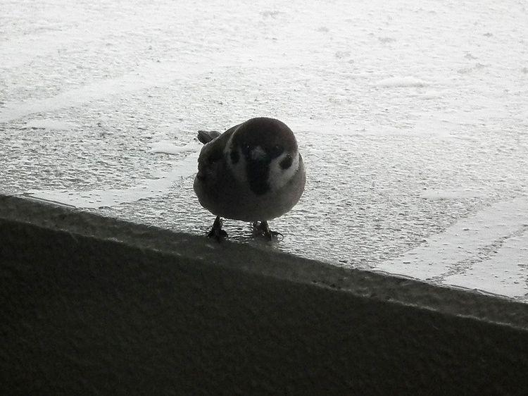 Snow0208_2