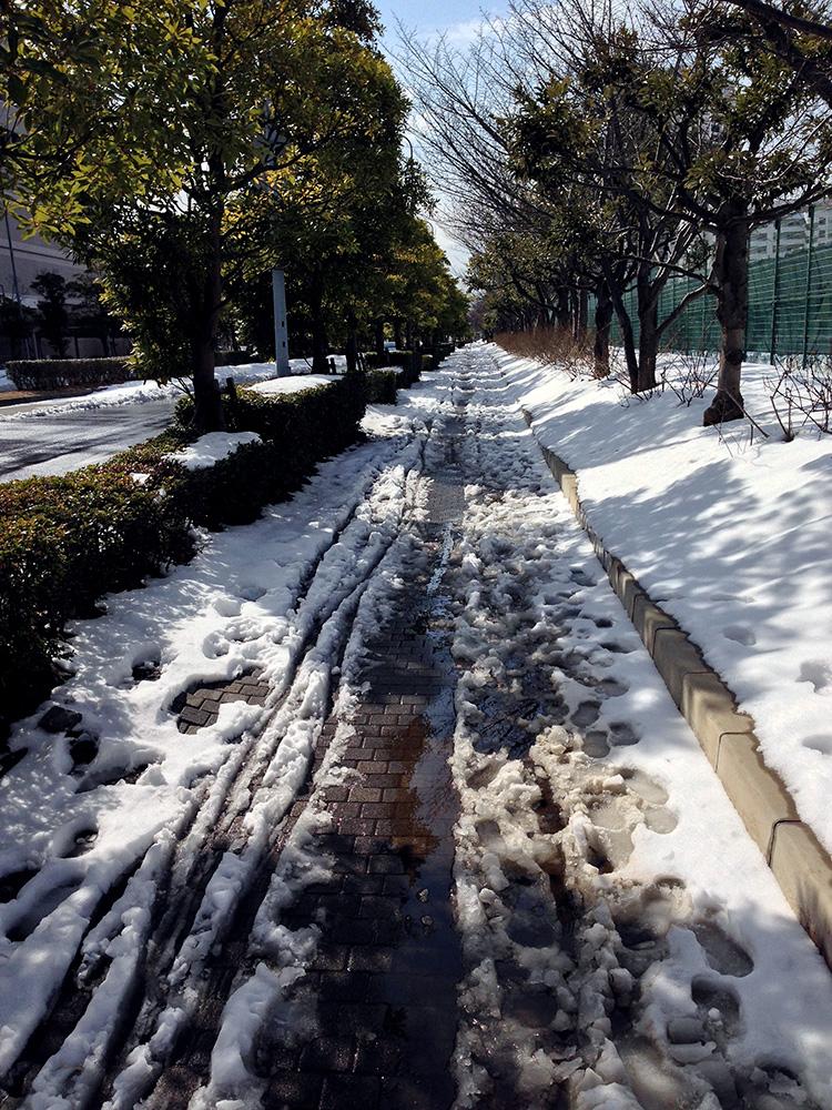 Snow0209_6