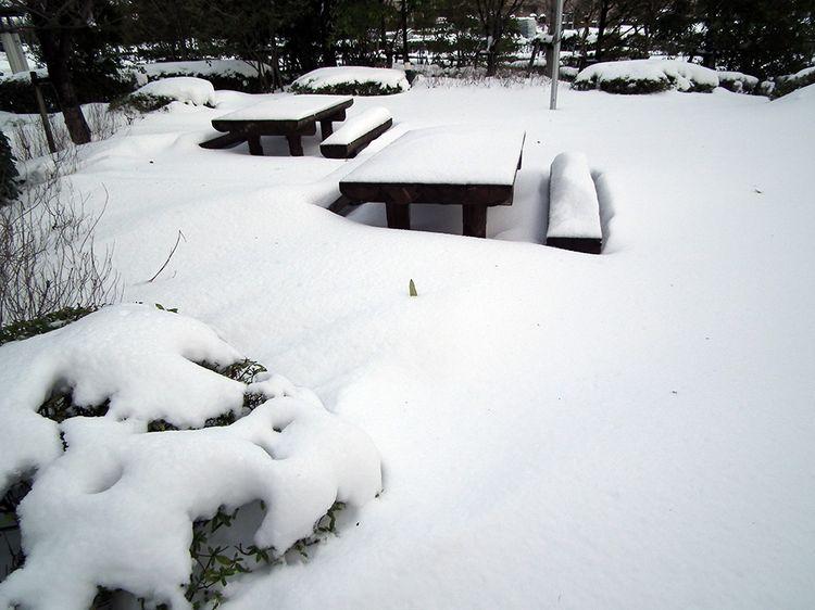Snow0209_1