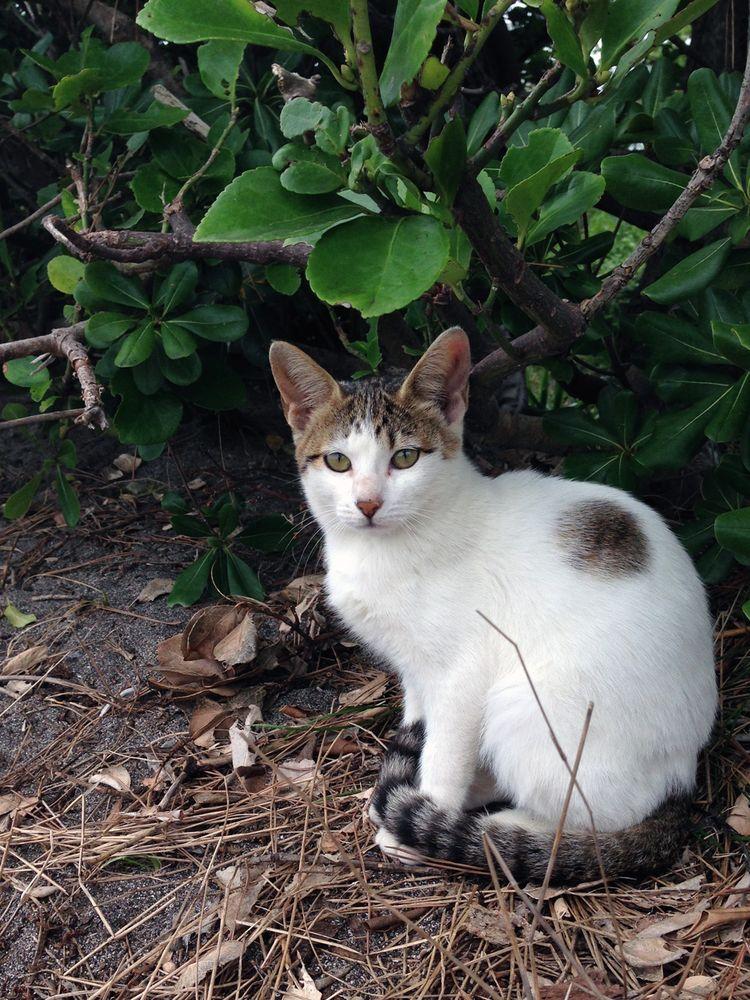 Chikuracats_02