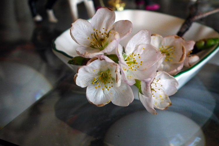Sakura20150319_1