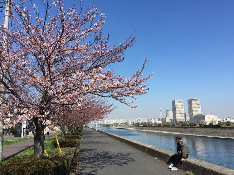 Sakura20150329_3