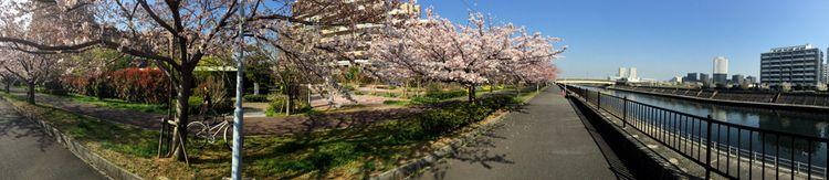 Sakura20150331_4
