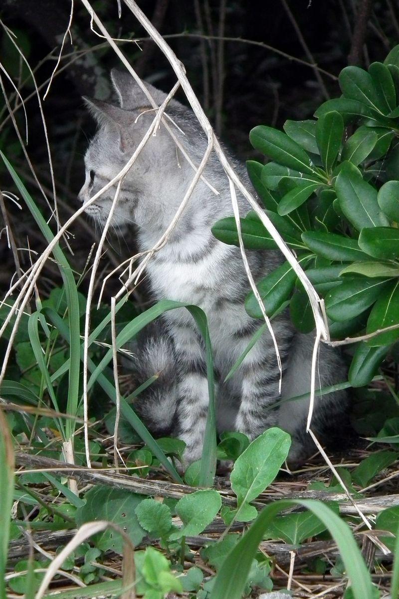 Chikuracats_01