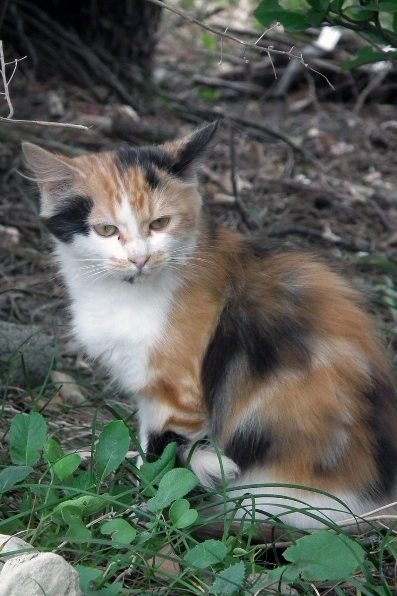 Chikuracats_05