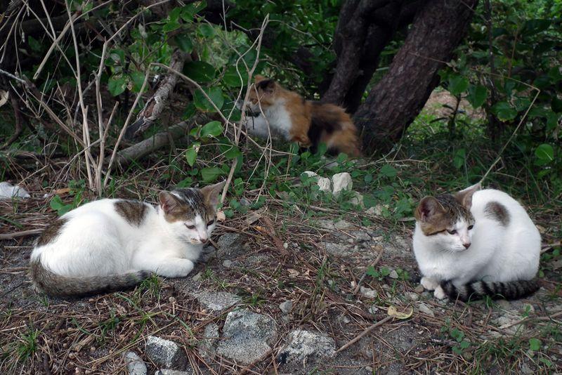 Chikuracats_04