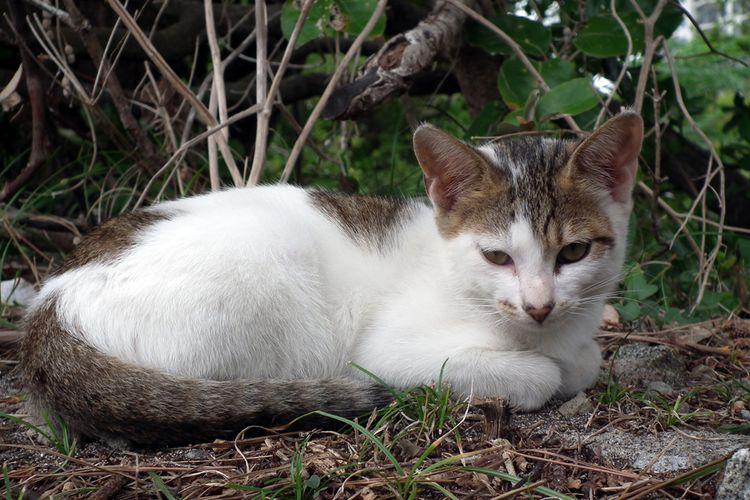Chikuracats_03