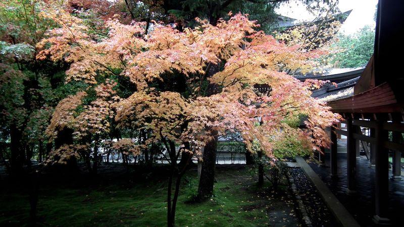 Kyotofall07