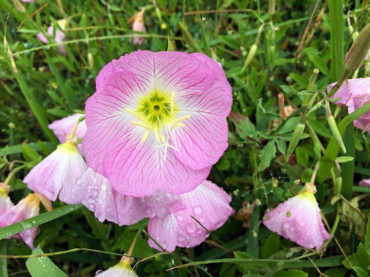 Flower201605_0