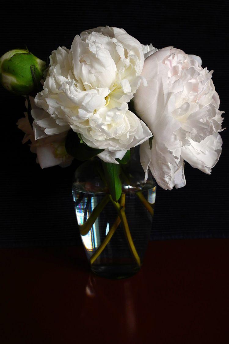 Flower2015006_3