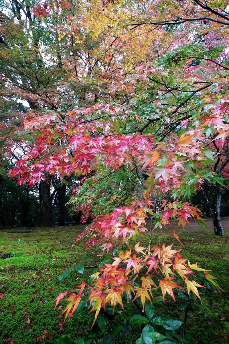 Kyotofall15