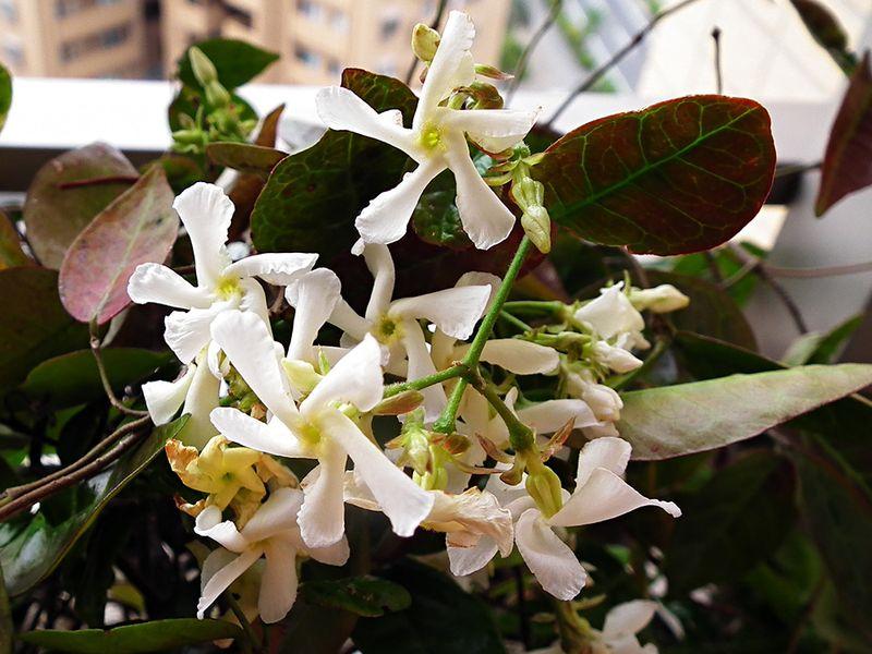 Flower201605_1