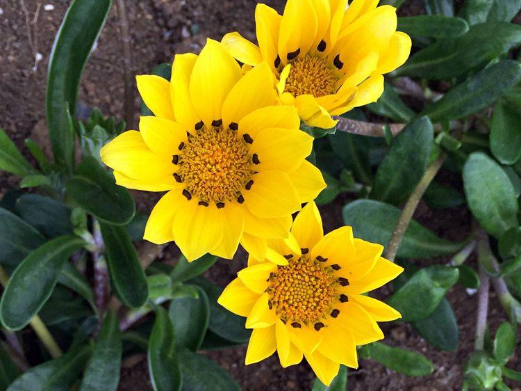 Flower201605_2
