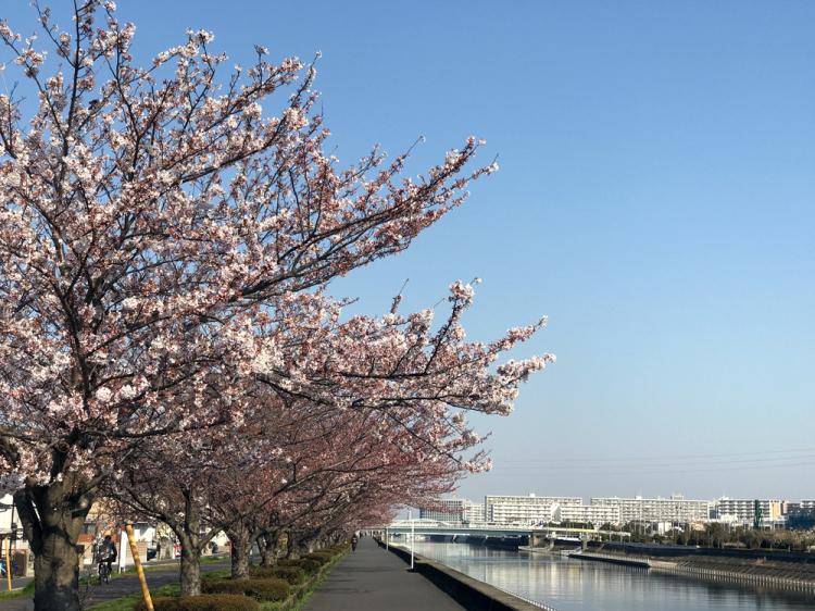 Sakura20170404_1