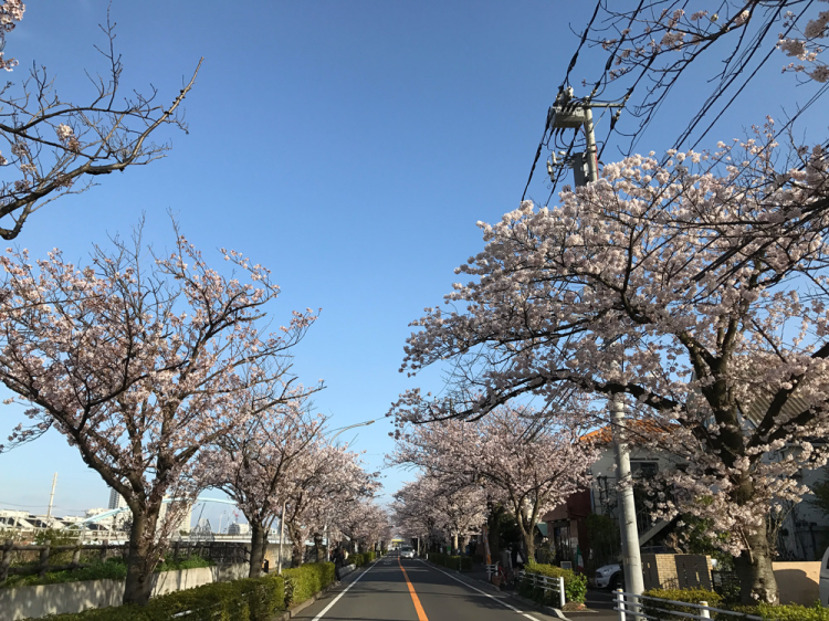Sakura20170407_1