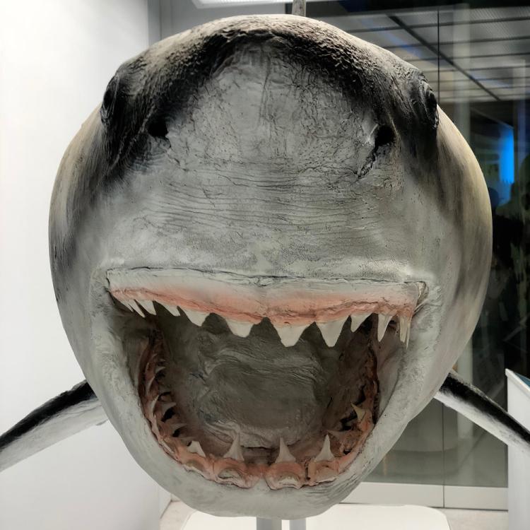 Shark2018_1