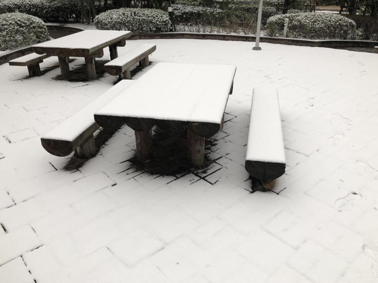 Snow20190209_1