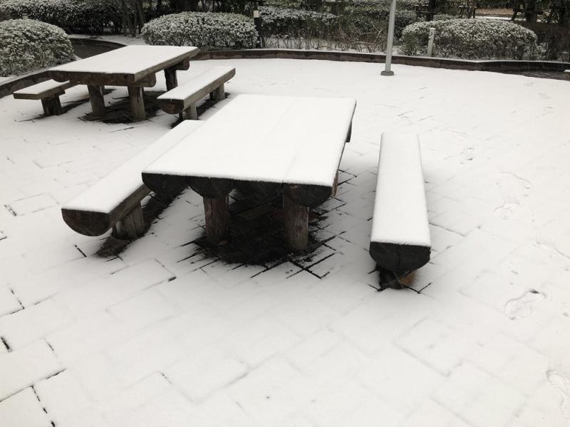 Snow20190209_2