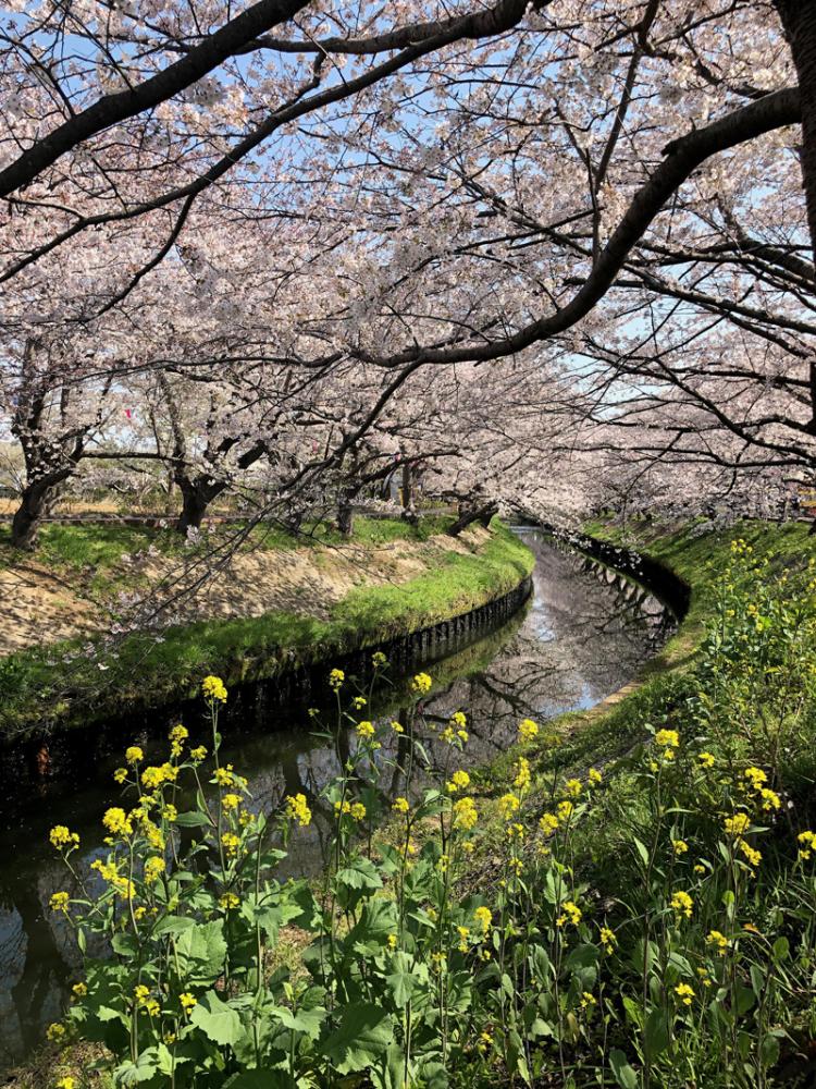 Takajoubashi201904_5