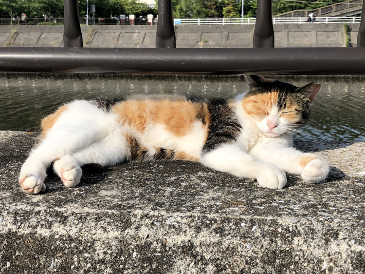 Cat20190627