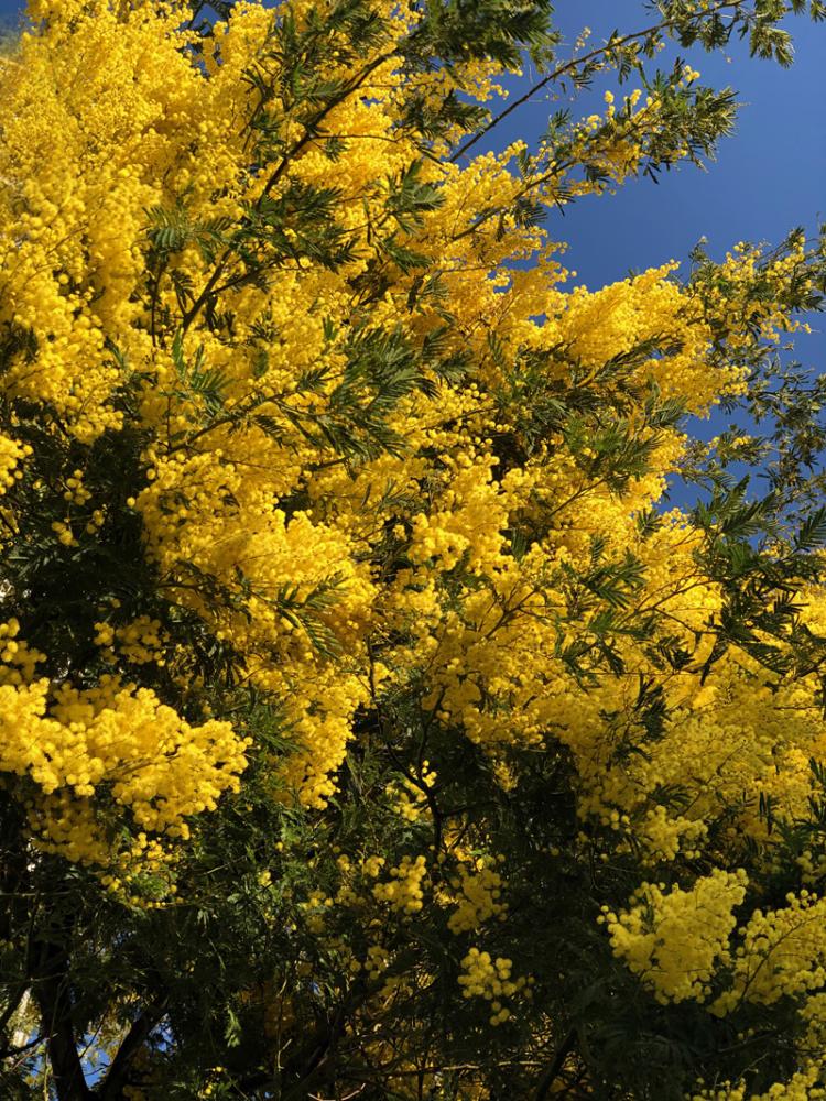 Springcome202002_1