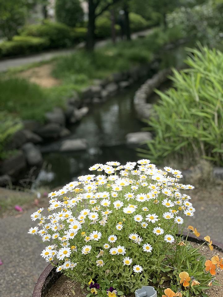 Oshima20210428_6