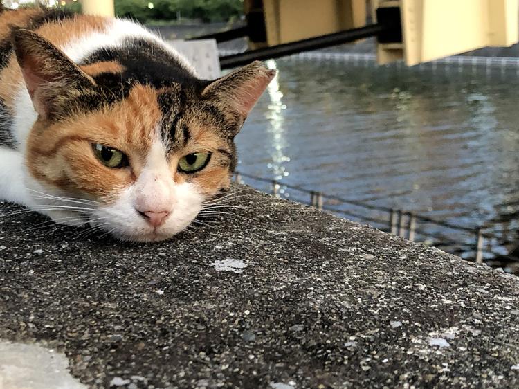 Cat20200817