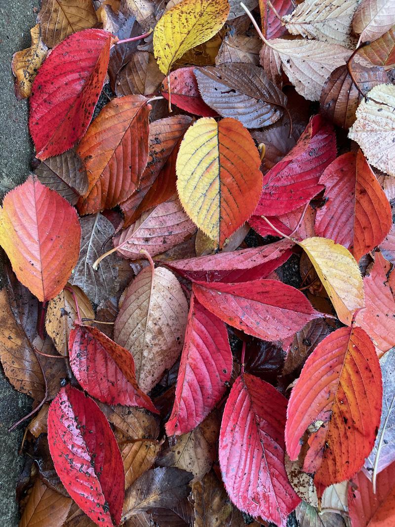 Fall202011_1