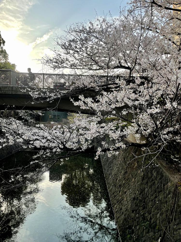 Sakura20210324_3