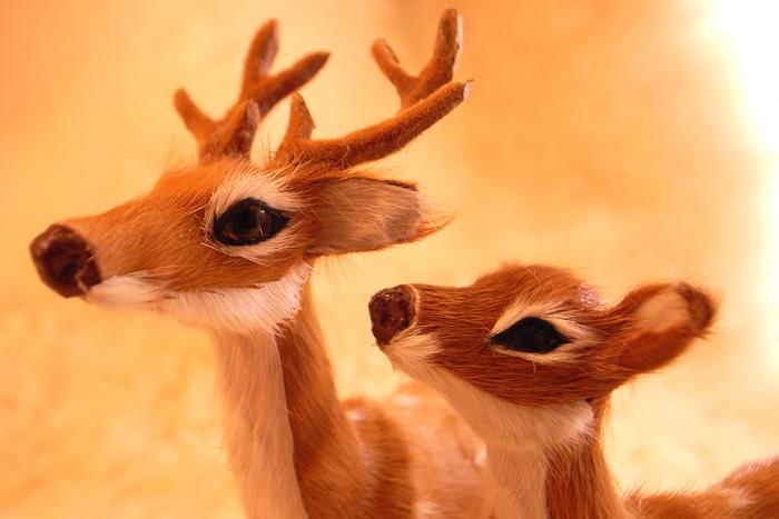 Deer02