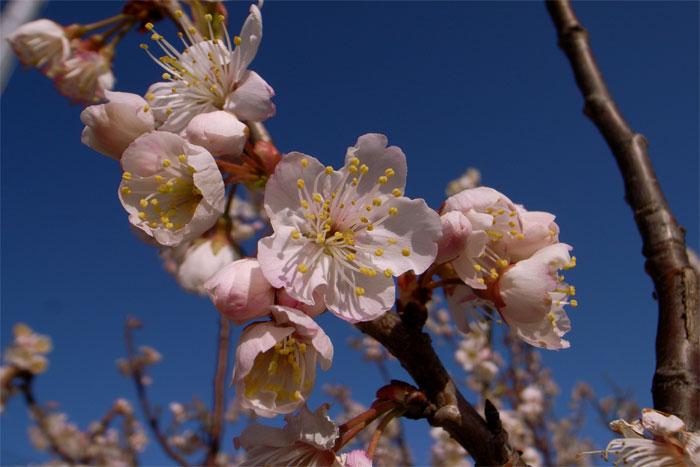 Spring09_02